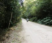 Africa Twin Adventures Knysna Forrest 2